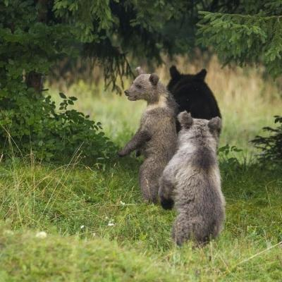 medved-opazovalnica-20